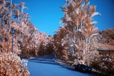 Infrared Photo – Tree And Road Royalty Free Stock Photos