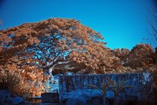 Free Infrared Photo – Tree And Park Royalty Free Stock Images - 3473109