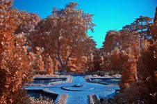 Free Infrared Photo – Tree And Park Royalty Free Stock Photography - 3473117