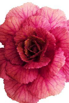 Free Doecorative Plant - 1 Royalty Free Stock Photography - 3473507