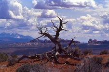Dead Tree And Rocks Stock Photos