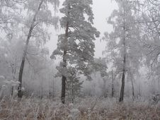 Free Breath Of Winter Stock Photos - 3474393