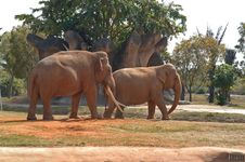 Free Elephant 6 Stock Photos - 3474733