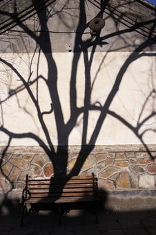 Free Tree Shadow Stock Image - 3474781