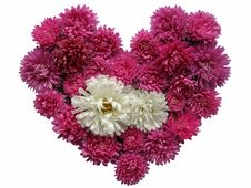 Free Floral Heart Stock Image - 3476391