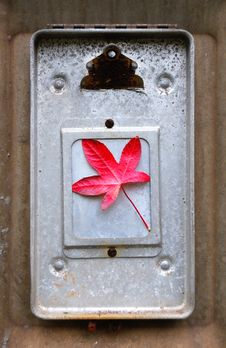 Free Red Leaf On Clipboard Royalty Free Stock Images - 3477199