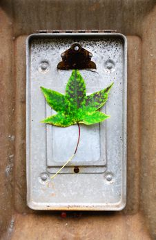 Free Green Leaf On Clipboard Stock Photography - 3477202