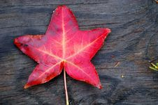 Free Red Leaf On Wood Background Royalty Free Stock Image - 3477226