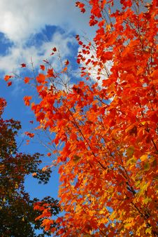 Free Autumn Leaves Stock Photo - 3477580