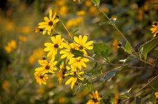 Free Yellow Flowers Stock Images - 3479134