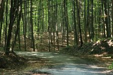 Free Forest Road. Royalty Free Stock Image - 3479336