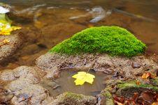 Leaf In River Stock Image
