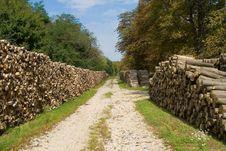 Free Woodpile. Stock Photo - 3479560