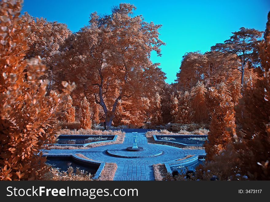 Infrared photo – tree and park