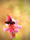 Free Honey Bee Pollinating Flowers In A Field Of Beautiful Flowers Royalty Free Stock Photo - 34710715