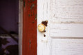 Free A White Rusty Doorknob On A White Door Royalty Free Stock Photography - 34713367