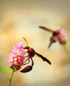Brown Wasps Pollinating Flowers In A Field Of Beautiful Flowers Royalty Free Stock Images