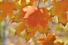Free Autumn Leaves Stock Images - 34713274