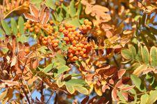 Free Autumn Leaves Stock Photo - 34713320