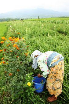 Free Green Garden Stock Image - 34713551