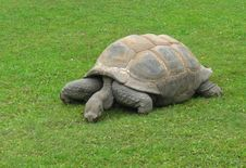 Free Turtle Royalty Free Stock Image - 34717156