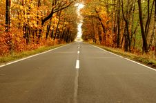 The Road Through The Forest. Royalty Free Stock Photography