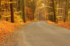 Free Forest Road. Stock Photo - 34717790