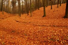 Free Forest In Autumn. Royalty Free Stock Image - 34718086