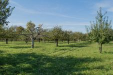 Free Apples Farm Stock Photography - 34719932