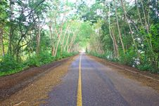 Free Road Under Green Tree Tunnel Stock Photography - 34724972