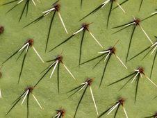 Cactus Background Royalty Free Stock Image