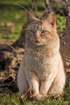 Free Orange Cat Stock Photos - 34734253