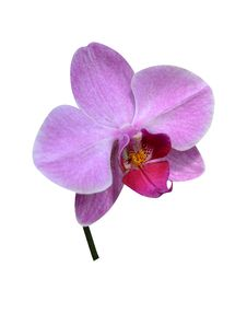 Orchids Isolated Stock Photos