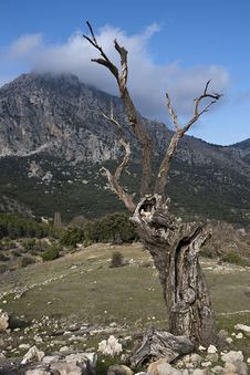Free Dry Tree In The Mountains Of The Sierra South Of Jaen Royalty Free Stock Photo - 34745535