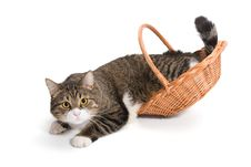Cat Is Not Placed In A Basket Stock Images