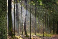 Free Light In Forest Royalty Free Stock Photo - 34749175
