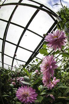 Free Flower On Black Flower Design Royalty Free Stock Photo - 34752005