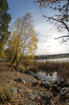 Free Autumn Tree Stock Image - 34753281