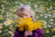 Free Girl With Autumn Leaves Royalty Free Stock Image - 34753356