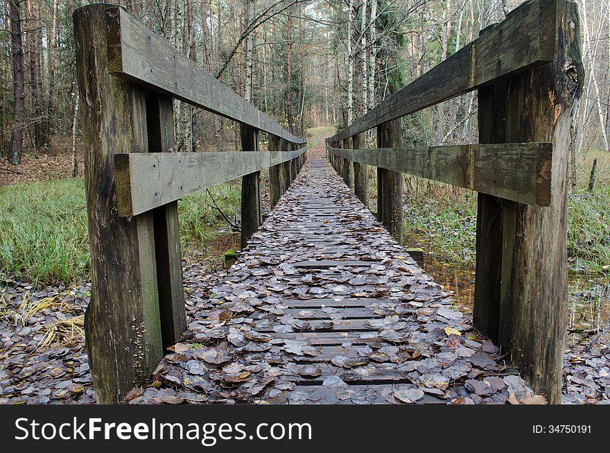 Bridge in autumn forest