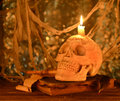 Free Skull With Book On Blurred Background Royalty Free Stock Photos - 34764578