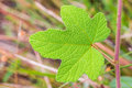Free Green Leaf Stock Photo - 34769330