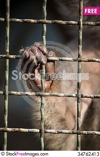 Free Money Hand Stock Photos - 34762413