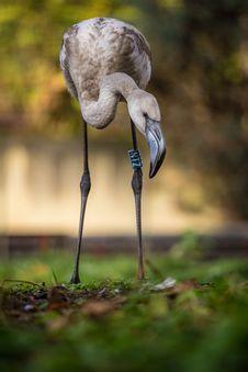 Free Flamingo Portraits Stock Images - 34760934