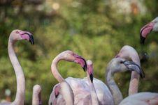 Free Flamingo Portraits Stock Image - 34761161