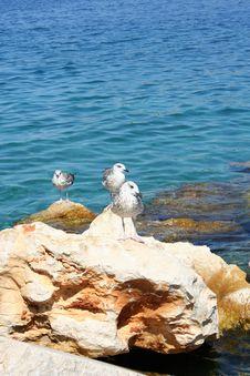 Seagulls On The Rock Stock Photo