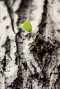 Free Seedling At The Old Tree Royalty Free Stock Images - 34774749