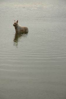 Free Dog In A Pond Stock Photos - 34771573