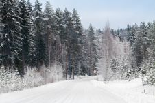 Free Winter Forest And A Snow Road Royalty Free Stock Image - 34774336
