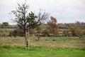 Free Cherry Tree Stock Photography - 34788812